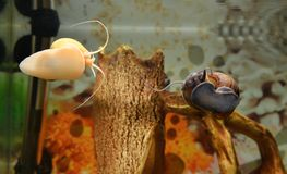 snails Royalty Free Stock Images