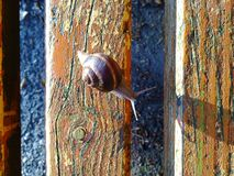 Snails on bench Stock Photography