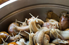 Snails in the bowl during preparation Stock Photo