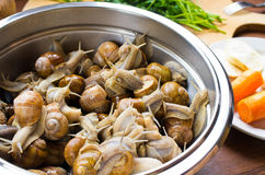 Snails in the bowl during preparation Royalty Free Stock Photography