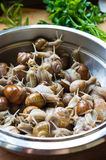 Snails in the bowl during preparation Royalty Free Stock Image