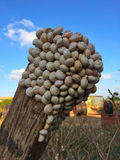 Snails On Tree Trunk Stock Images