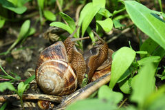 Snails chatting Stock Photos