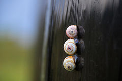 Snails. Is the common name of gastropod mollusks provided with a spiral shell. There are sea  sometimes called shells, freshwater and terrestrial .  move Stock Photos