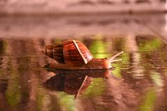 Snails crawling On the floor royalty free stock photography