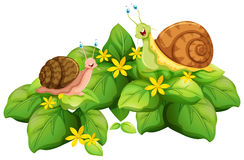 Snails crawling on leaves Stock Photos