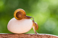 Snails are crawling slowly stock images