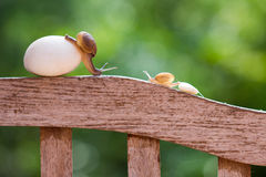 Snails are crawling slowly Royalty Free Stock Image