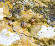 Snails in Devitakskoy cave, Bulgaria Royalty Free Stock Photography