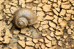 Snails died on dry soil. Snails died on the dry ground Royalty Free Stock Photography