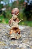 Snails för överkant 3 Arkivfoton