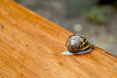 Snails. In the garden ,all forms and sizes Stock Photography