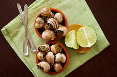 Snails with Garlic Butter Stock Photography
