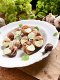 Snails with garlic butter Stock Images