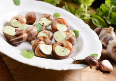 Snails with garlic butter Royalty Free Stock Image