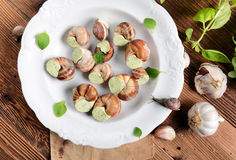 Snails with garlic butter Royalty Free Stock Photography