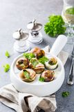 Snails with garlic herbs butter Stock Image