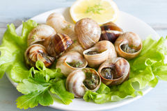 Snails with garlic on the plate food concept Royalty Free Stock Image
