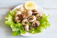 Snails with garlic on the plate food concept Royalty Free Stock Photography