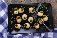 Snails with herbs butter garlic, top view Royalty Free Stock Image