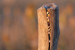 Snails hidden into a pole at sunset. Small snails hidden into a pole at sunset, The colours are orange, purple Stock Images