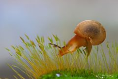 Snails Hide royalty free stock photo