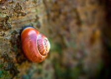 Snails Home Stock Images