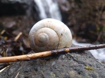 The snails house near the waterfall in the forest. Stock Photography