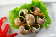 Snails i vitlöksmör på plattan Arkivfoto