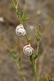 Snails on leaf. On the brown background Stock Images
