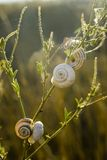 Snails on leaf. On the brown background Stock Photo