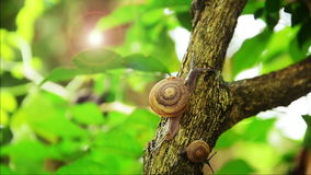 Snails stock footage