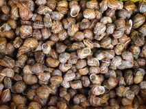Live Snails For Home Cooking. Edible live snails for sale, Athens markets. Typical of Cretan cuisine Royalty Free Stock Photo