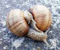 Two snails in the game Stock Images