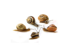 Snails Meeting Stock Photos