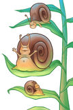 Snails in the morning Royalty Free Stock Photos