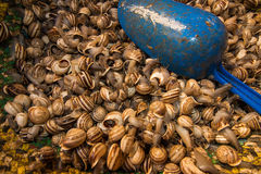 Snails on morrocan market Royalty Free Stock Image