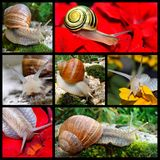Snails mosaic Stock Photo