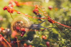 Snails and moss royalty free stock image