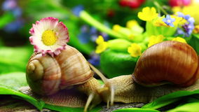 Snails near green leaves stock video footage