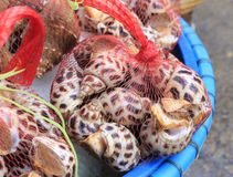 Snails in nylon string bag Royalty Free Stock Photography