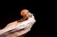 Snails on old wood Stock Images