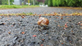At a snails pace Royalty Free Stock Photos