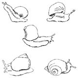 Snails. Pencil sketch by hand Stock Image