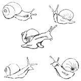Snails. Pencil sketch by hand Royalty Free Stock Photos