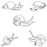 Snails. Pencil sketch by hand Stock Photography