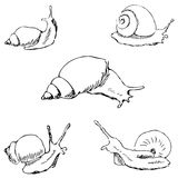 Snails. Pencil sketch by hand Royalty Free Stock Photo