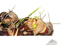 Snails on plate stock images