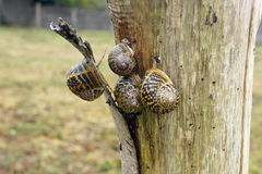 Snails a. Snails in a pole with selective focus Stock Photos