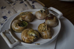 Snails prepared by the cook at restaurant. ! Stock Photography